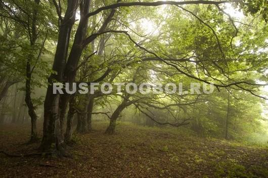Сумерки в лесу