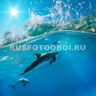 Дельфины под волной