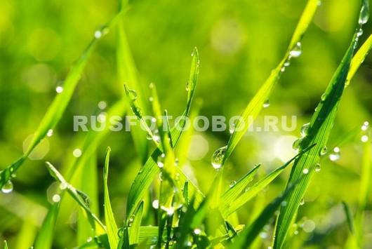 Солнце в траве