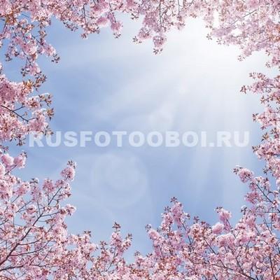 Фотообои Сакура в небе