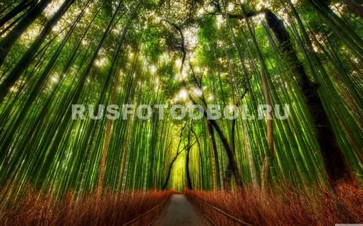 Тропа через бамбук