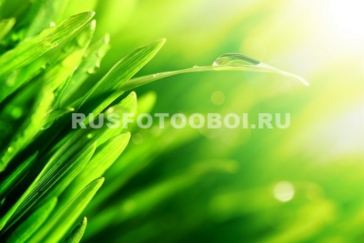 Трава в контурном свете