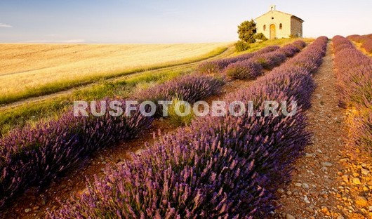Италия лаванда