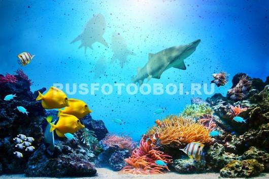 Фотообои Акулы около рифов