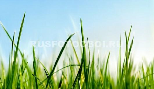Травинки на ветру