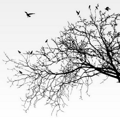 Фотообои Черная ветка