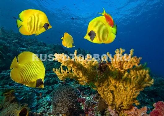Фотообои Желтые рыбки бабочки