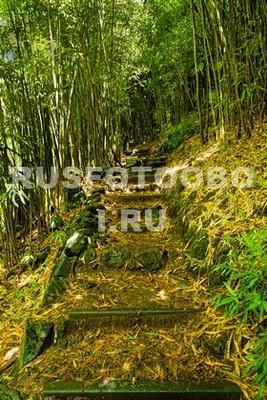 Лесенка в бамбуковом лесу