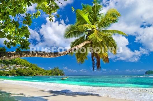 Пальма над пляжем