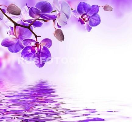 Фиолетовая ветвь орхидеи