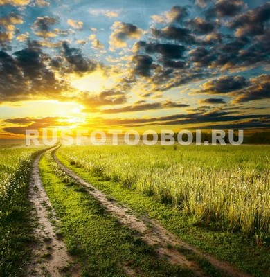 Дорога в пшеничном поле
