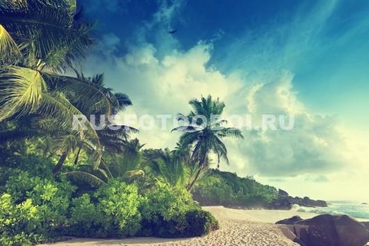 Пальмы на берегу
