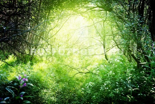 Лесные дебри