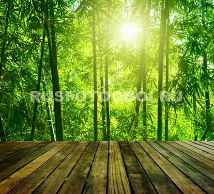 Терраса с видом на бамбуковый лес