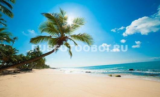 Пальма около голубого моря