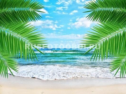 Ветки пальм