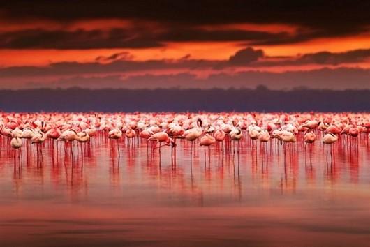 Фотообои Фламинго в Африке