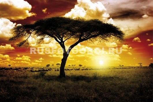 Африканское дерево