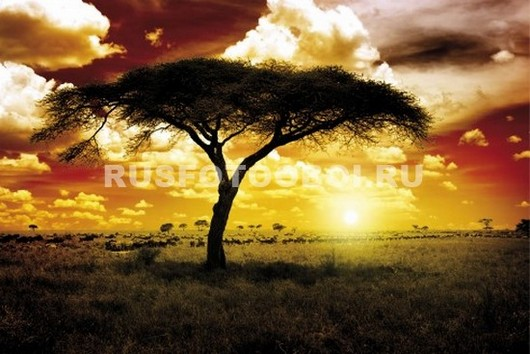 Фотообои Африканское дерево