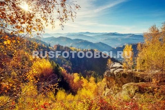 Желтые деревья в горах