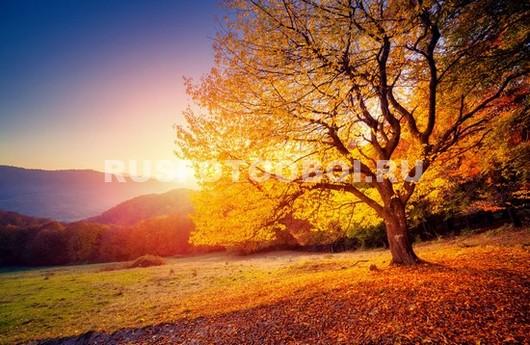 Осеннее дерево в поле
