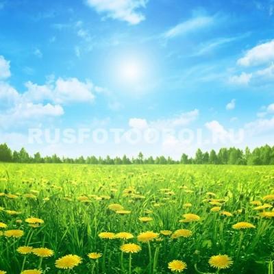 Солнце и одуванчики