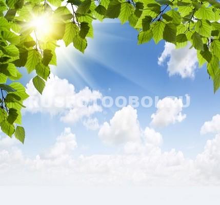 Листья березы и лучи солнца