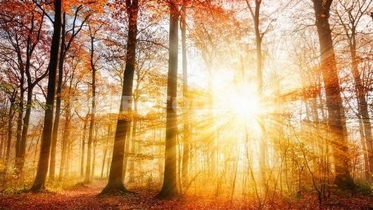 Фотообои Солнце в осеннем лесу