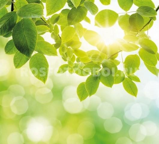 Луч солнца в ветках