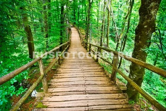 Мост в лесу