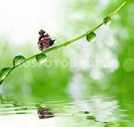 Фотообои Бабочка на травинке