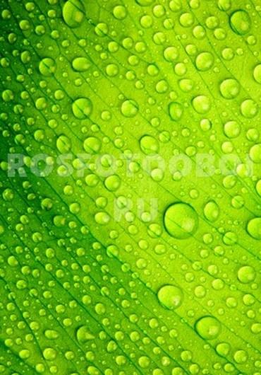 Капли на зеленом фоне