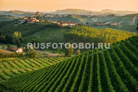 Виноградники в горах