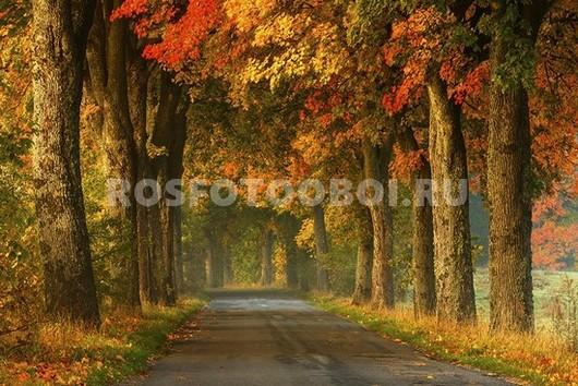 Осенняя аллея в тумане