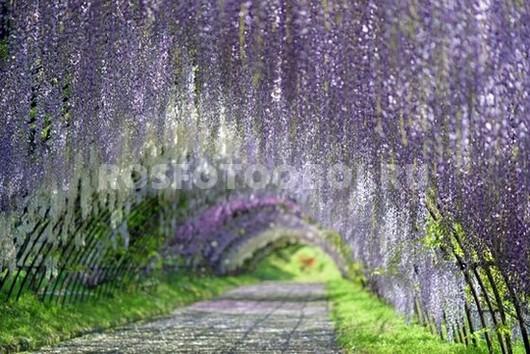 Аллея из цветов