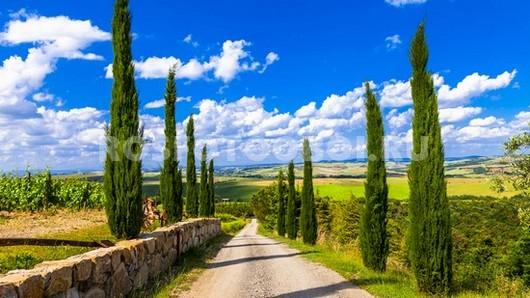 Кипарисы в Италии