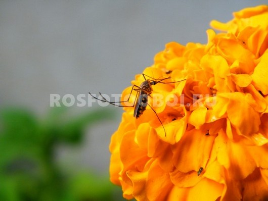 Фотообои Комар цветок