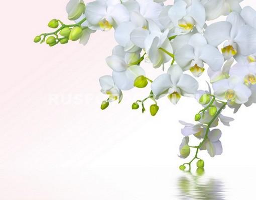 Белая гроздь орходей