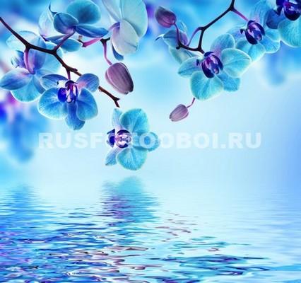Синие орхидеи над водой