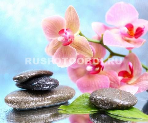 Пастельная орхидея
