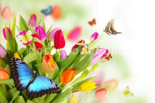 Фотообои Бабочки на тюльпанах