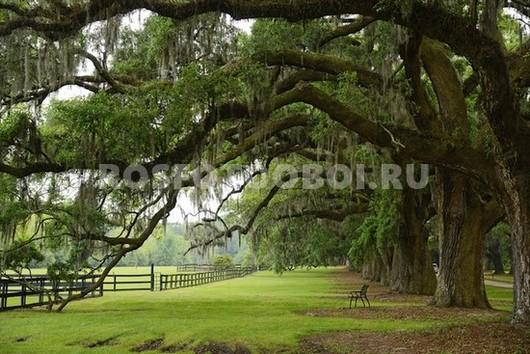 Старинные деревья