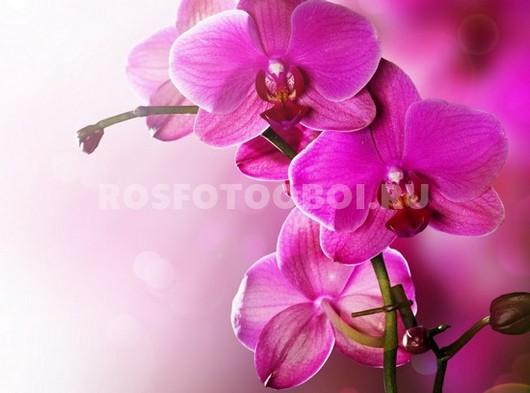 Пурпурная орхидея