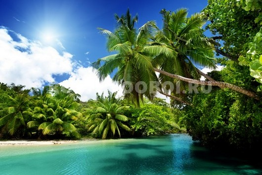 Пальмы в бухте
