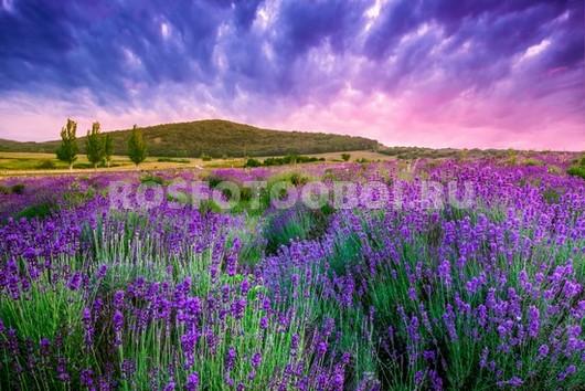Фотообои Лаванда в поле