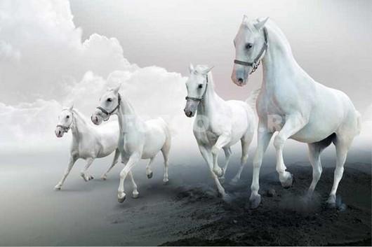 Фотообои Белые лошади