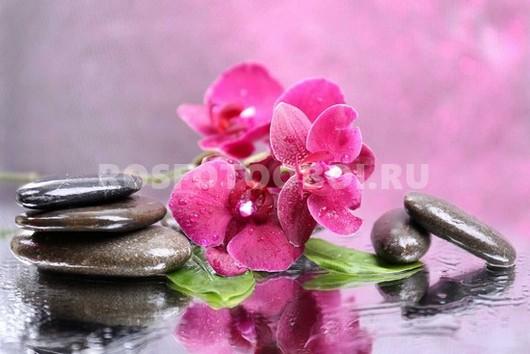 Фотообои Орхидея с камнями