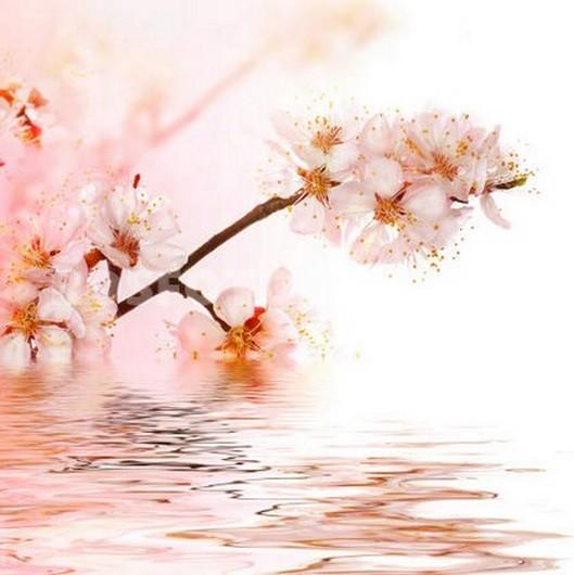 Недно розовая сакура