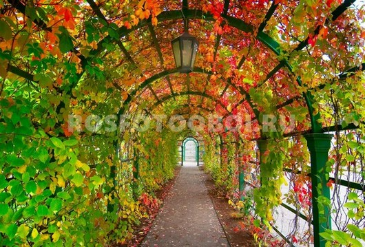 Парковая арка