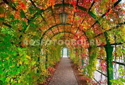 Фотообои Парковая арка